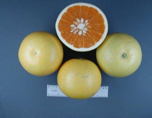 Новозеландский грейпфрут (New Zealand Grapefruit)
