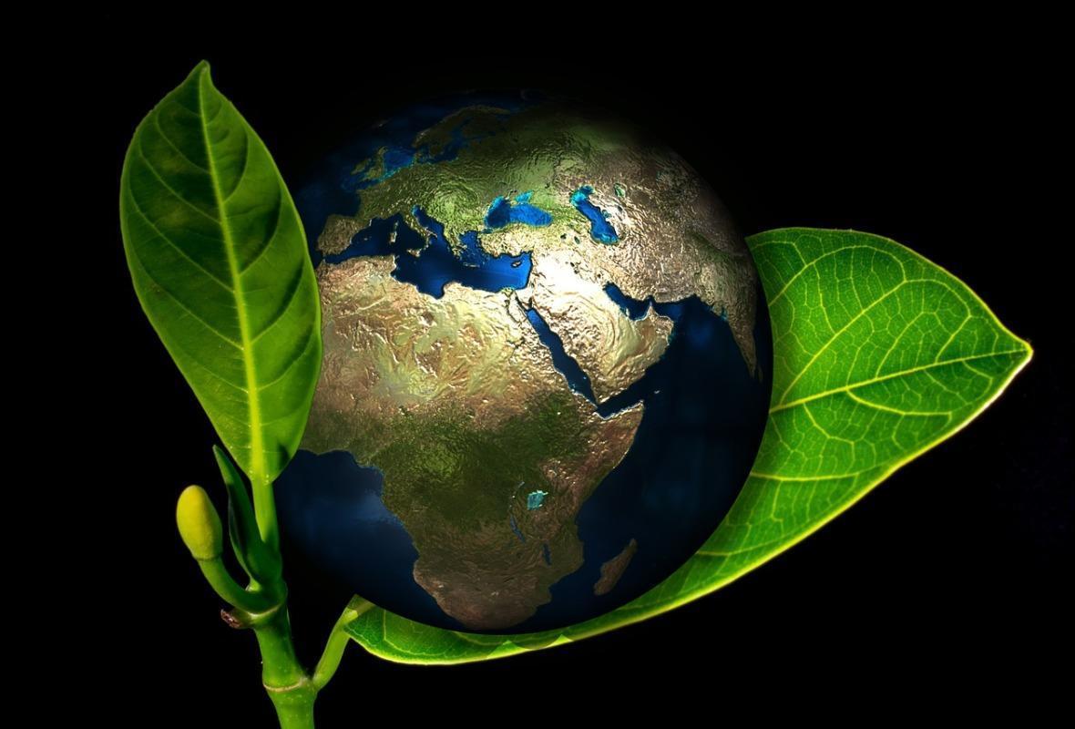 18 мая - международный День Растений