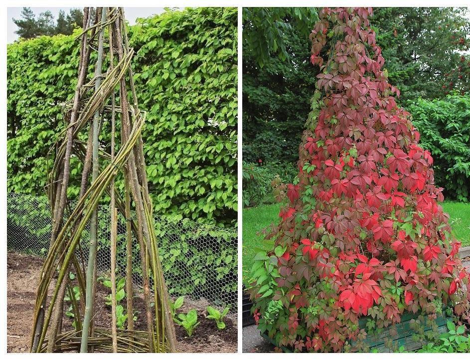 Зліва: на створення зеленої вежі вам знадобиться зовсім небагато часу і сил. Справа: дівочий виноград - відмінний озеленювач.