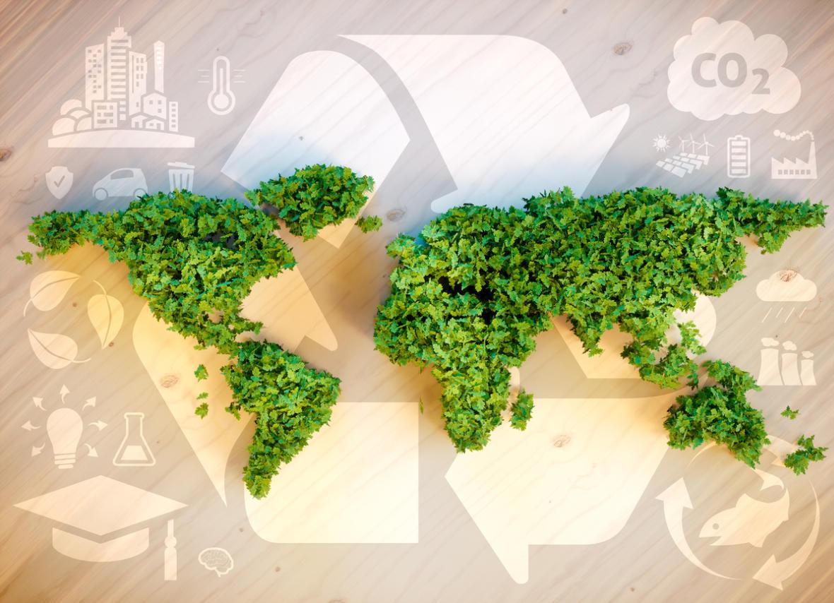 Растения — основа устойчивого биоценоза нашей планеты