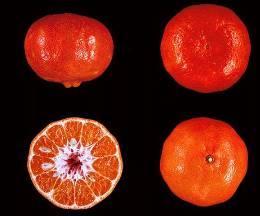 Танжерин Дэнси (Dancy Tangerine)