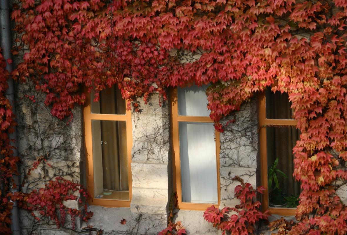 Будинок з виноградом