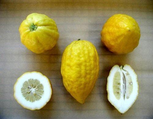Этрог (Greek citron)